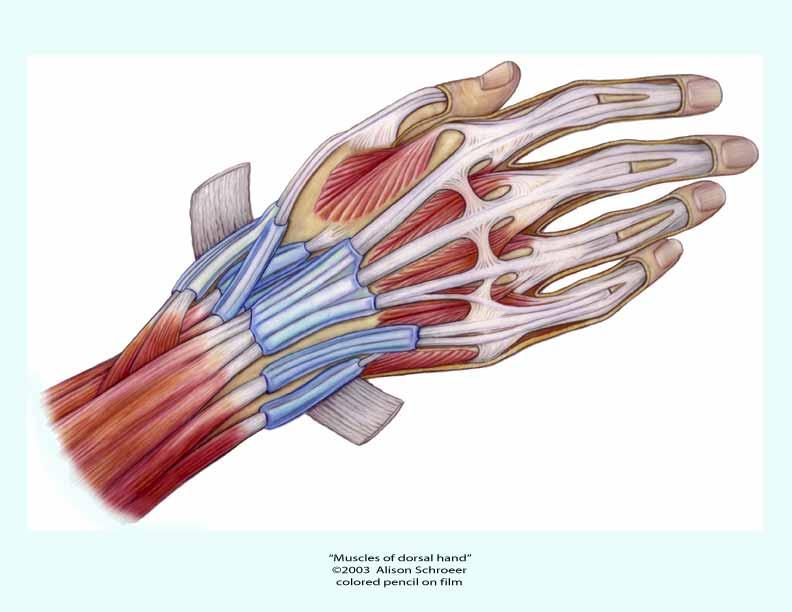 Finger Shape and Fretboard Radius